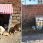 Em Teresina, mulher faz casinhas com caixas de leite para abrigar cães de rua