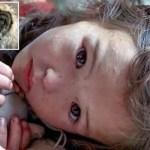 Criança ficou perdida na floresta por 11 dias, e sem este cão herói não teria sido salva