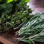 Aprenda a cultivar temperos em casa: saiba como e quais os tipos