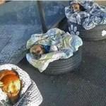 Rodoviária em Curitiba abriga e protege cães de rua
