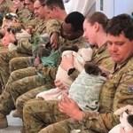 Soldados australianos usam hora de descanso para amamentar coalas feridos nos incêndios