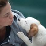 Os cães encaram seus donos como se fossem seus pais, diz estudo