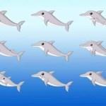Quantos golfinhos vê na imagem? Este é o novo desafio da internet