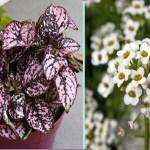 Conheça 10 plantas que crescem em qualquer canto da casa mesmo sem luz