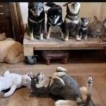 Desafio: Consegue encontrar o cão de verdade entre outros cães esculpidos em madeira?