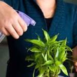 Se você tem plantas de dentro de casa, jamais faça estas 5 coisas