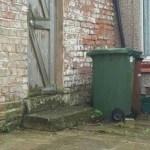 Você é um bom observador? Consegue achar o gato escondido na foto?