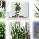6 plantas que deve ter em casa para melhorar a qualidade do ar