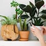 Ideias simples que vão deixar sua casa mais fresca e verde