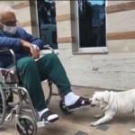 Cachorra espera pelo dono por cinco dias em porta de hospital