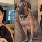Cães devolvidos ao abrigo por Claudia Ohana estão em depressão e aguardam adoção