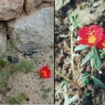 Aprenda a forma correta de cultivar a Flor onze-horas