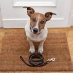 Reveladas as verdadeiras razões por que seu cão segue você por todos os lados