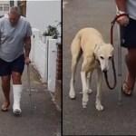 Após gastar R$1.800,00 com exames e consultas, homem descobre que seu cão estava o imitando
