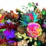 今年2013年1月23日に発売された、エレクトロニカ・バンドDarkstarのアルバム「News from Nowhere」のご紹介です。