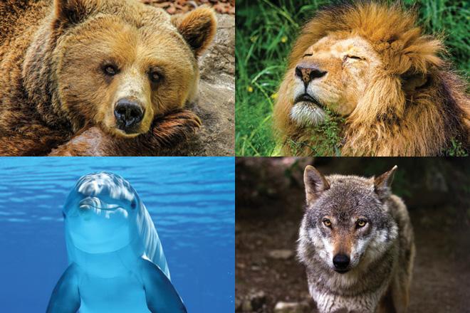Dormi come un orso un leone un delfino o un lupo