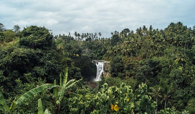 Deforestation shareholder resolutions