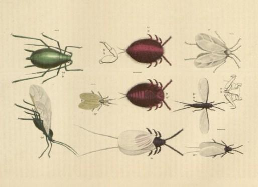 Parasites_communs_plantes