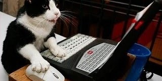 lolcats blog rude comments