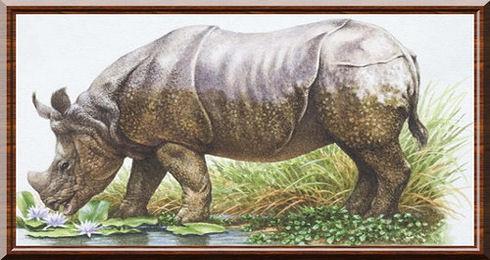 Rhinocéros indien 07
