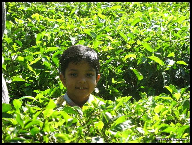Rachit Among Tea Plantation
