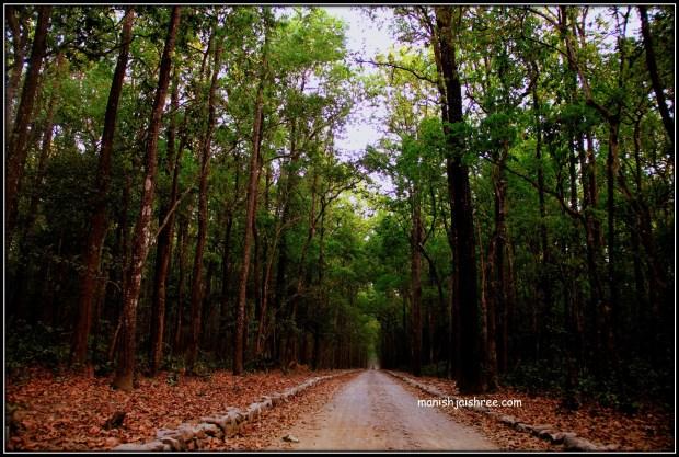 Sal forested Sitavani