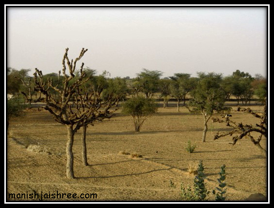 Thar Desert, around Nawalgarh