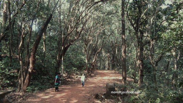 Wandering  in the wild Matheran