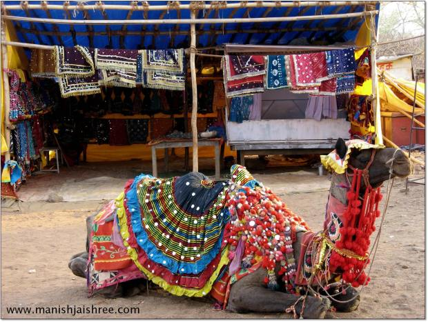 Decorated camel in Chittorgarh fort