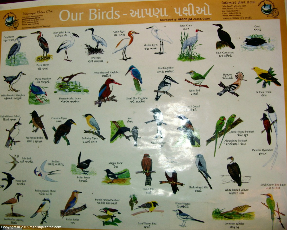 The Bird Chart @ Gir Jungle Resort