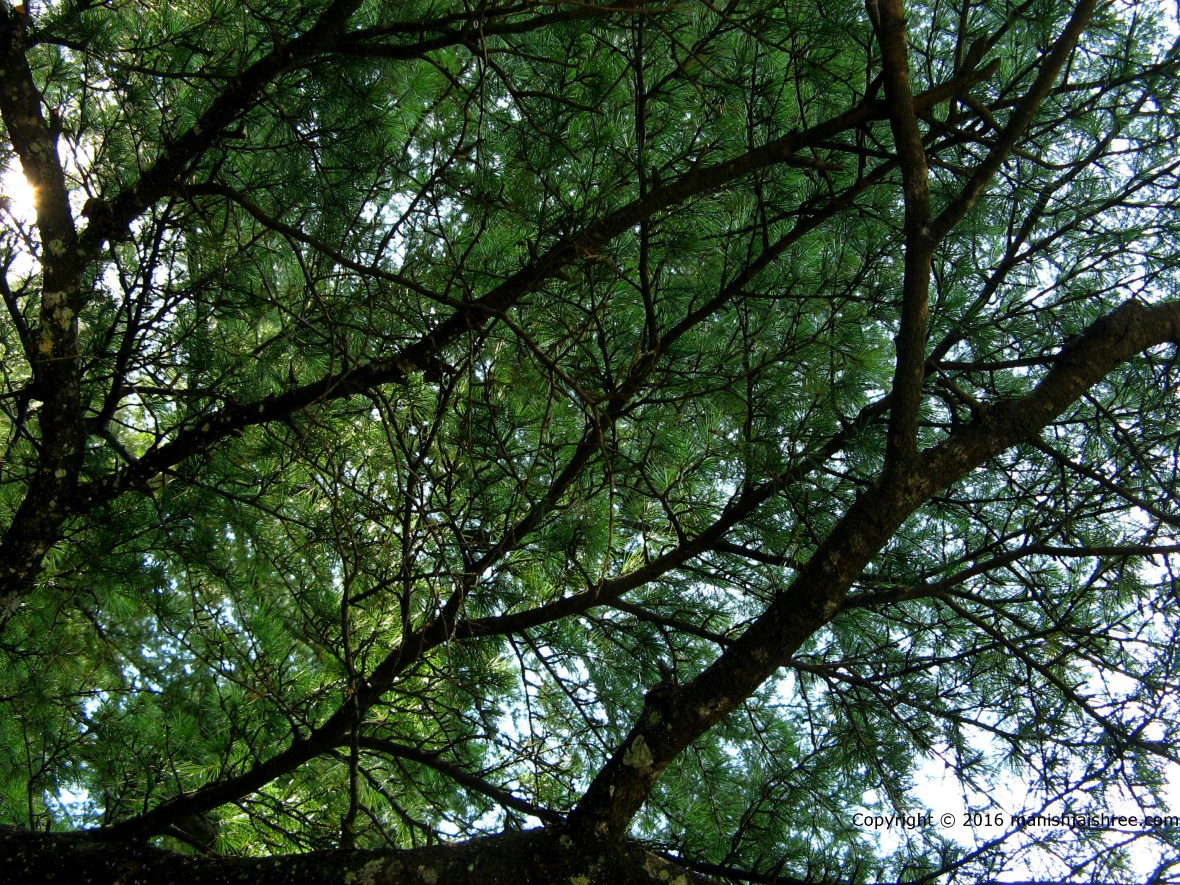 A canopy of tree over Kuber Temple Complex, Jageshwar