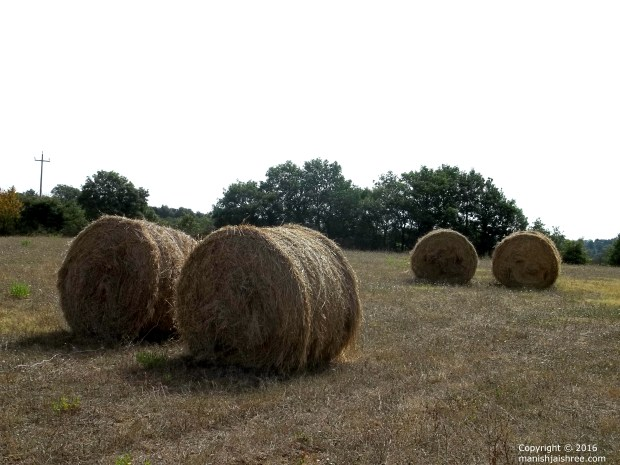 Cylindrical Hay-Bales in Tuscany, Italy - Courtesy Fabio Carlucci