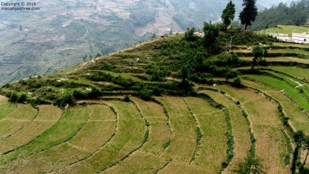Beautiful Step-farm from Nanda-Devi trek, Munsiyari