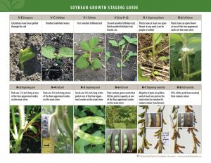 Soybean Staging Guide_MPSG_2015