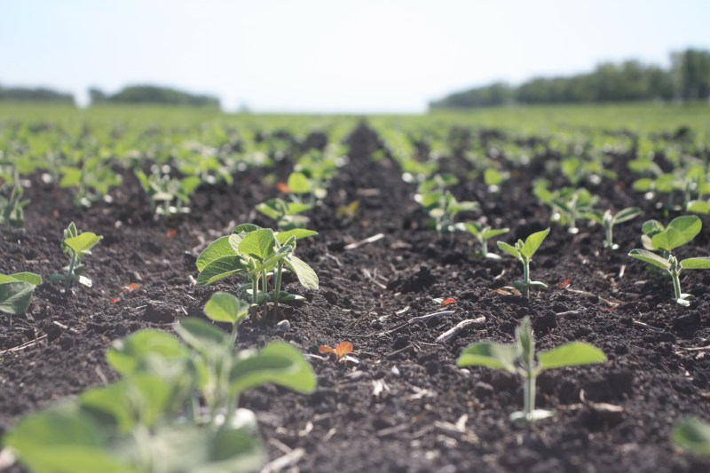 The Challenge and Promise of Soybeans in Canada – A