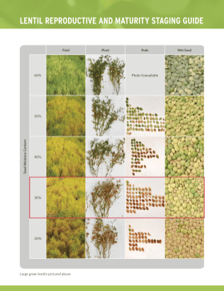 Lentil Reproductive and Maturity Staging Guide_Page_2
