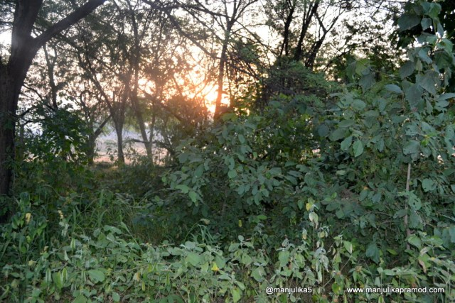 At the sunrise- Chambal Safari lodge