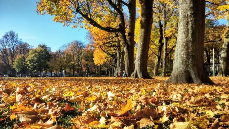 Autumn, Brussels, Reason to Visit Belgium, Europe, Travel blogger