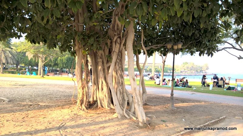 Al Mamzar Park in Dubai -Greena and spacious