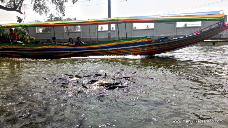 Fishes in Chao Phraya River, Thonburi.