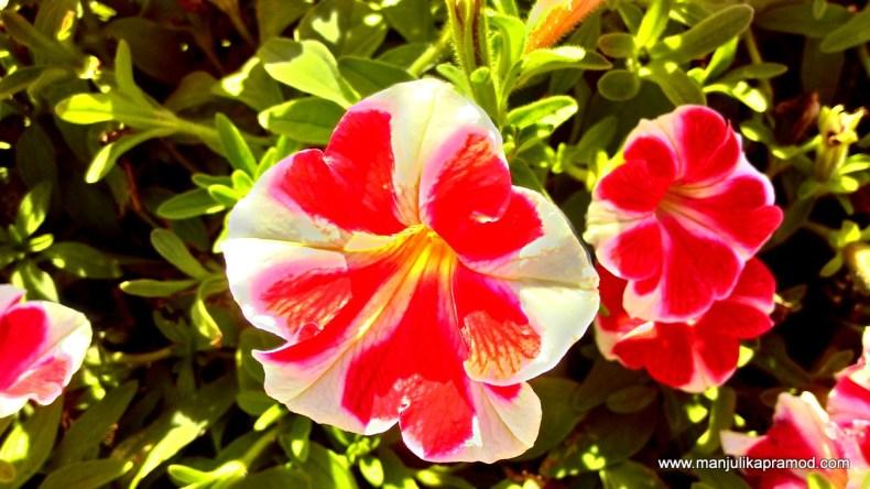 Garden, Dubai, Travel blogger, flower, photography