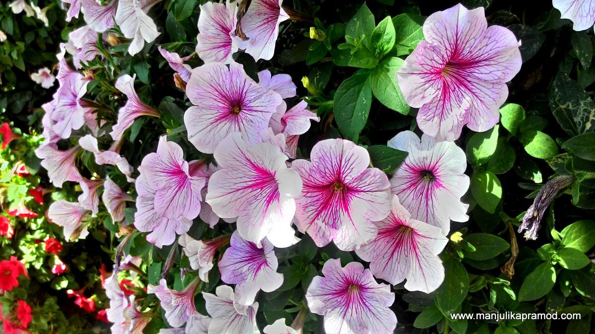 Flower photography, Dubai, Dubai Miracle Garden