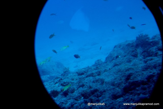 Submarine ride, Indian Ocean, Pictures, Things to Do in Mauritius