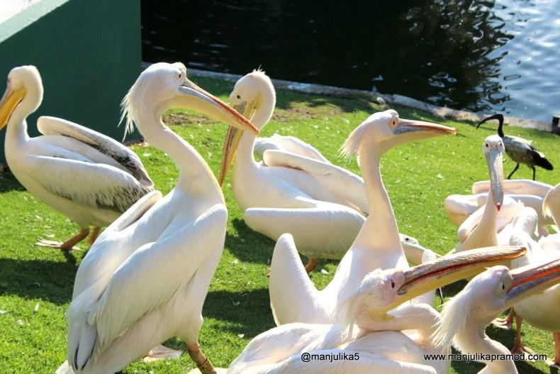 Monte Casino Bird Gardens, Travel, South Africa