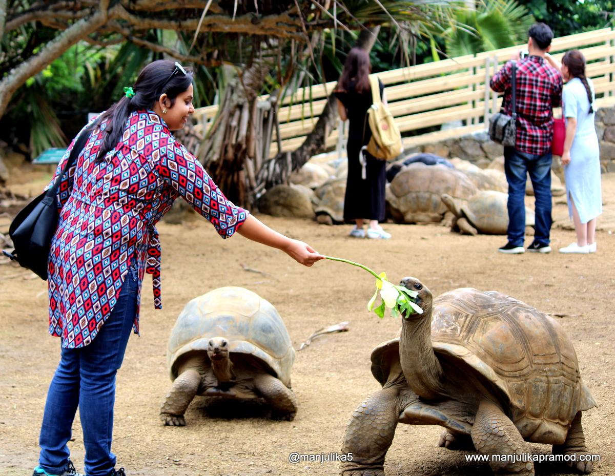Aldabra tortoise, Mauritius