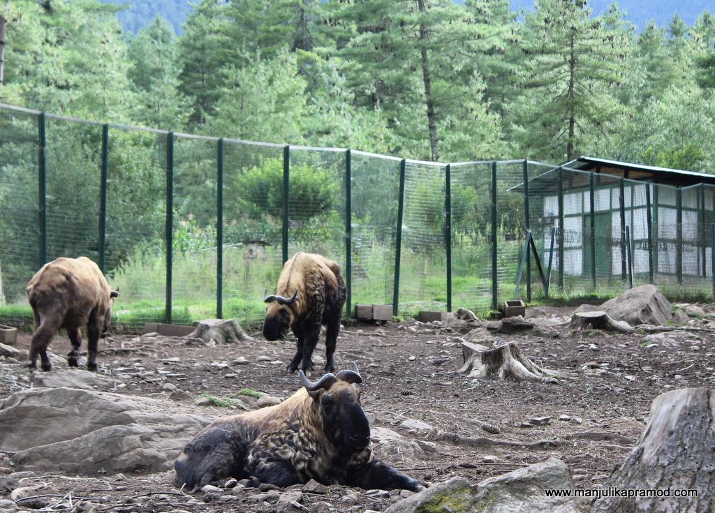 National animal of Bhutan
