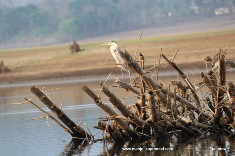 Blogpost on birding