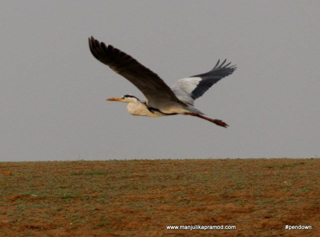 Bird sighting, Bird watching, Bird photography