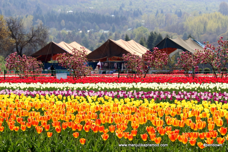 The Indira Gandhi Memorial Tulip Garden