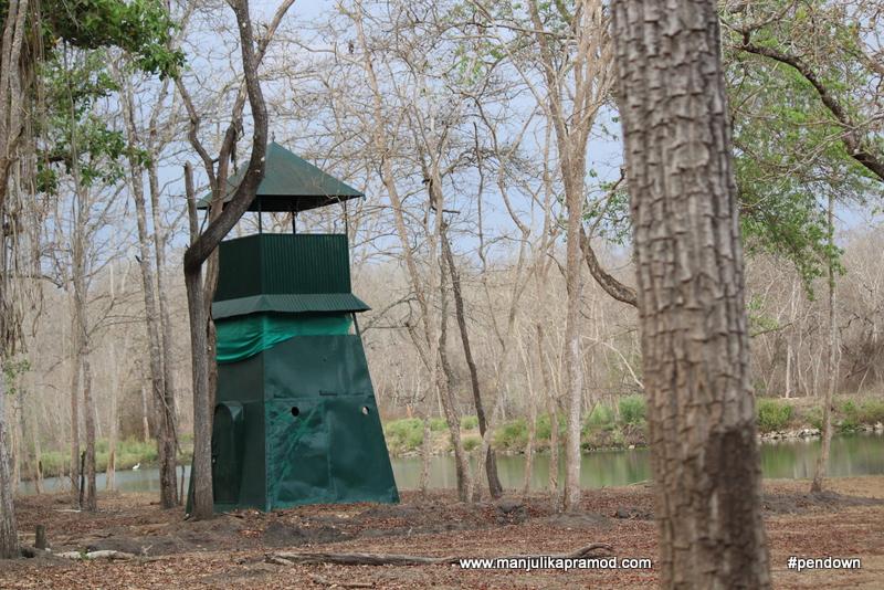 Tiger spotting area in Kabini
